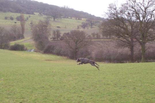 Gandalf Running